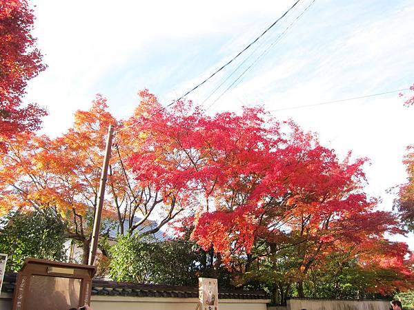 161116-5 東福寺 (4)