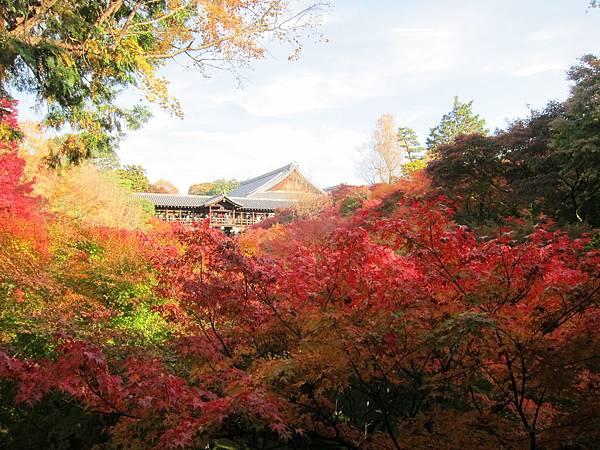 161116-5 東福寺 (5)