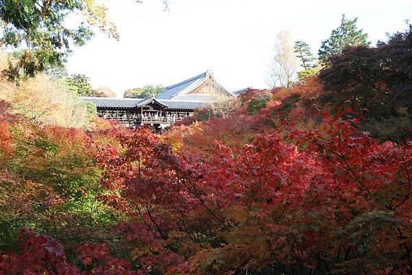 161116-5 東福寺 (6)
