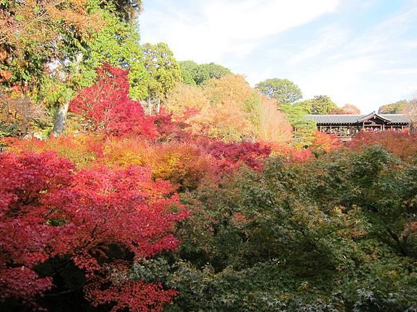 161116-5 東福寺 (7)