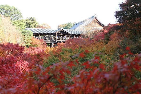 161116-5 東福寺 (9)