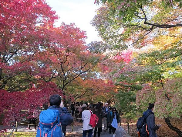 161116-5 東福寺 (15)