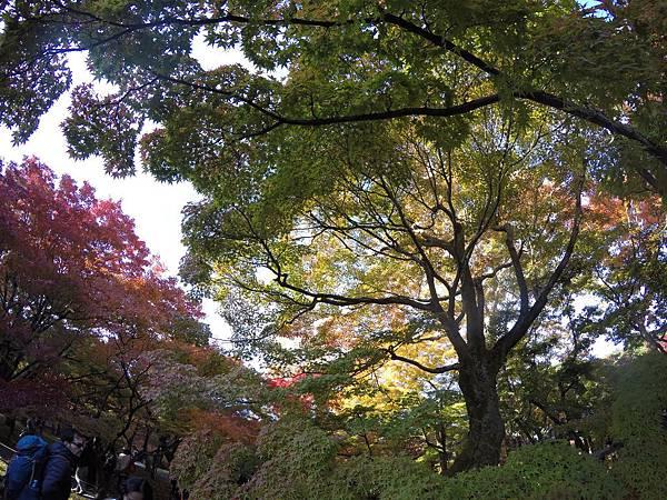 161116-5 東福寺 (17)