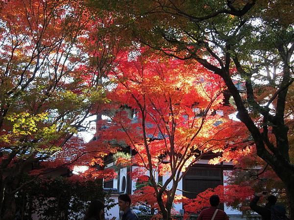 161116-5 東福寺 (18)