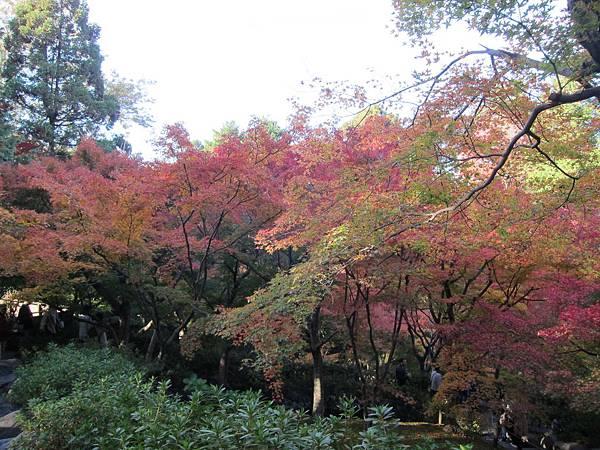 161116-5 東福寺 (21)