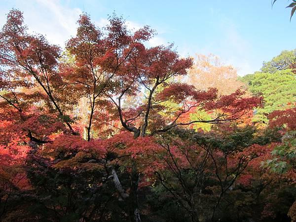 161116-5 東福寺 (23)