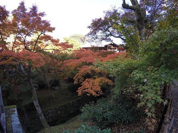 161116-5 東福寺 (24)
