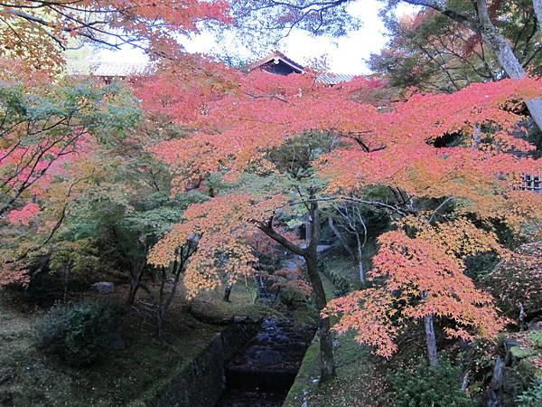 161116-5 東福寺 (26)