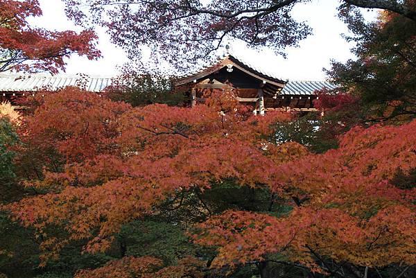 161116-5 東福寺 (28)
