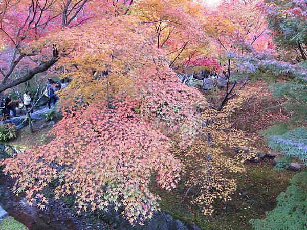 161116-5 東福寺 (29)