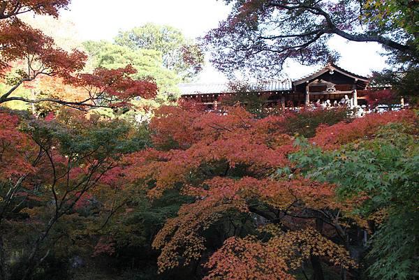 161116-5 東福寺 (32)
