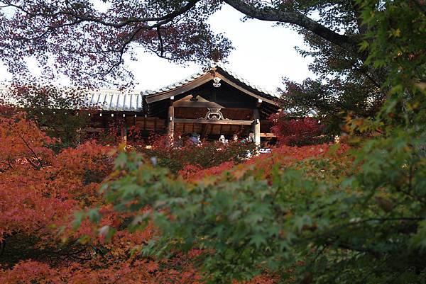 161116-5 東福寺 (33)