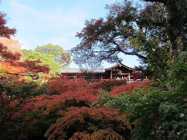 161116-5 東福寺 (34)