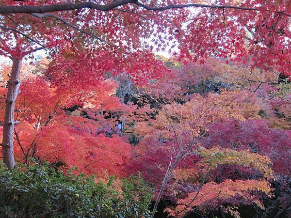 161116-5 東福寺 (43)