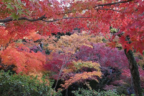 161116-5 東福寺 (44)