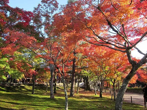 161116-5 東福寺 (50)