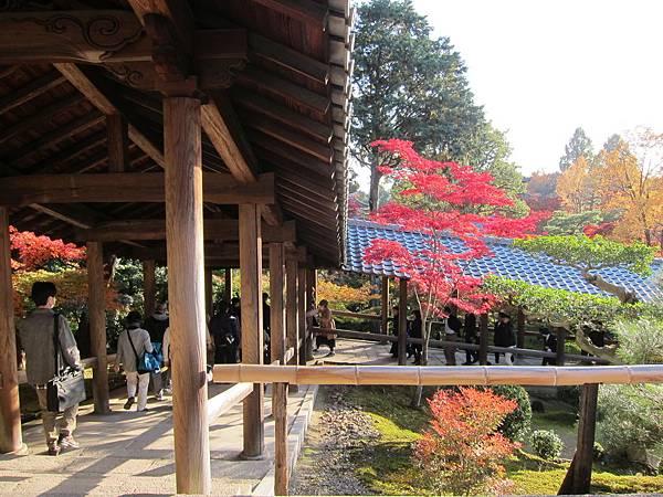 161116-5 東福寺 (54)