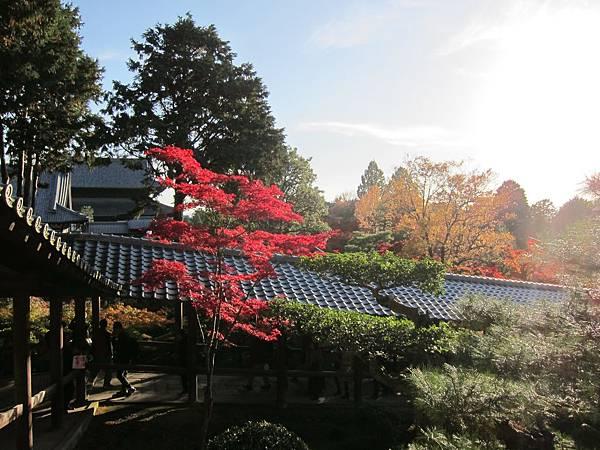 161116-5 東福寺 (55)