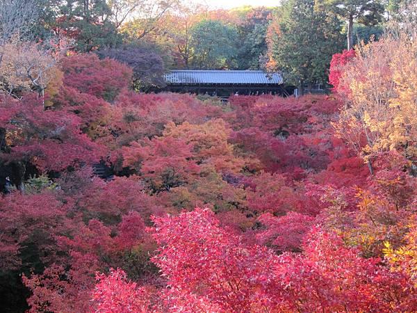 161116-5 東福寺 (62)