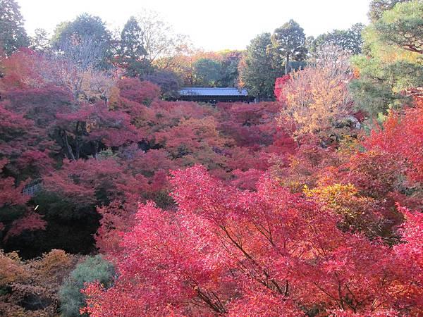 161116-5 東福寺 (63)