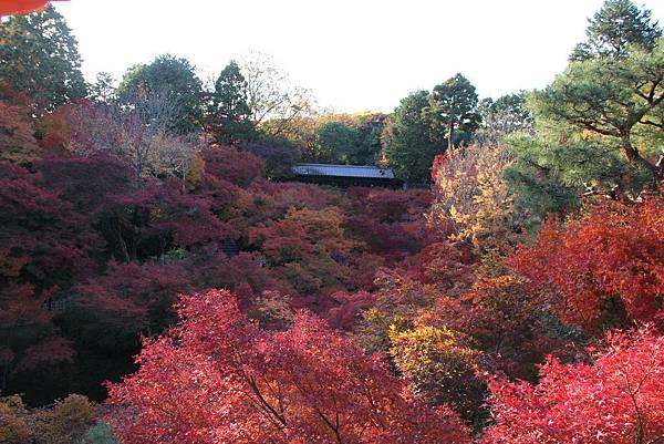 161116-5 東福寺 (64)