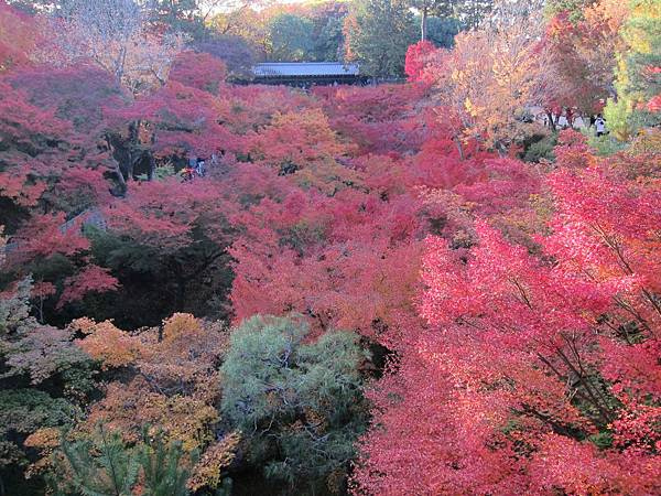 161116-5 東福寺 (65)