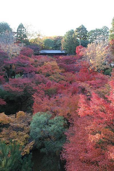 161116-5 東福寺 (68)