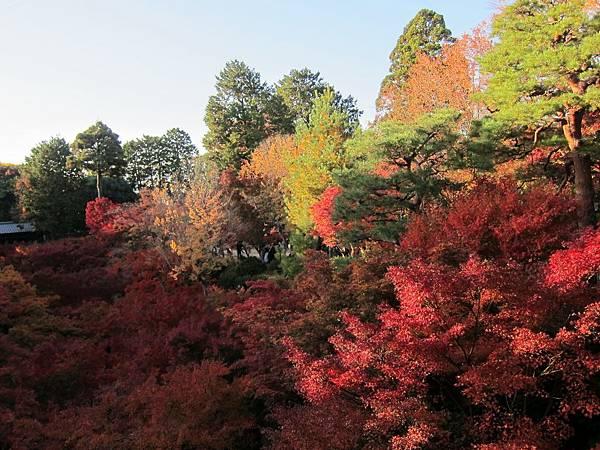 161116-5 東福寺 (69)