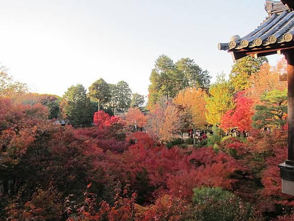161116-5 東福寺 (70)