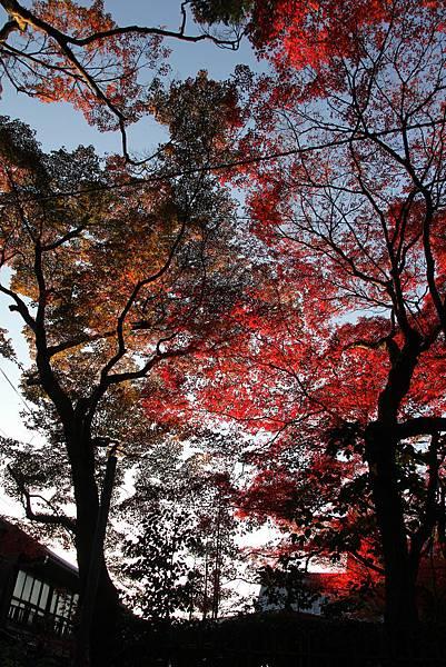 161116-5 東福寺 (79)