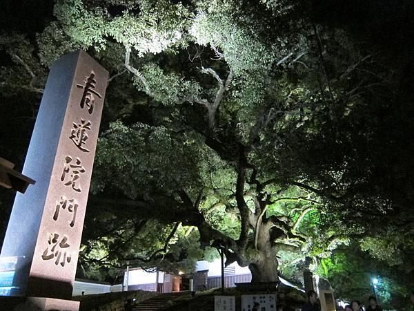 161117-8 青蓮院門跡夜間參拜 (2)