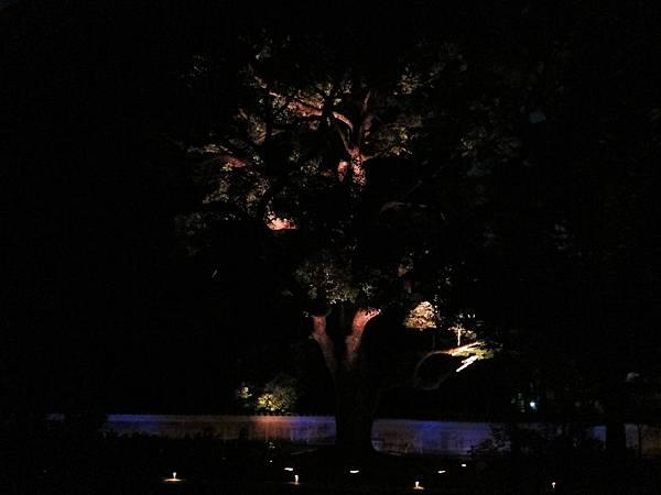 161117-8 青蓮院門跡夜間參拜 (10)