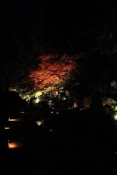 161117-8 青蓮院門跡夜間參拜 (29)