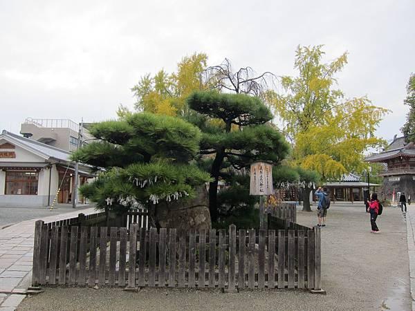 161119-3 四天王寺 (7)