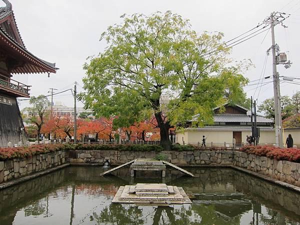 161119-3 四天王寺 (41)