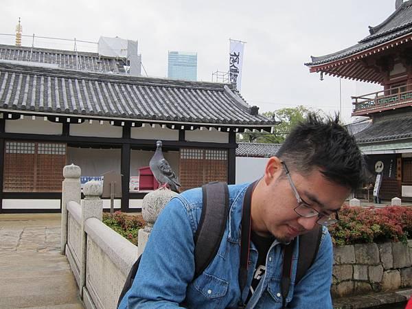 161119-3 四天王寺 (43)