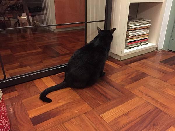 180107 屋頂上的貓私廚 (18)