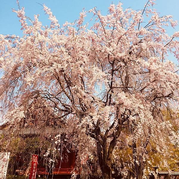 180403-1 上野恩賜公園 (3).jpg