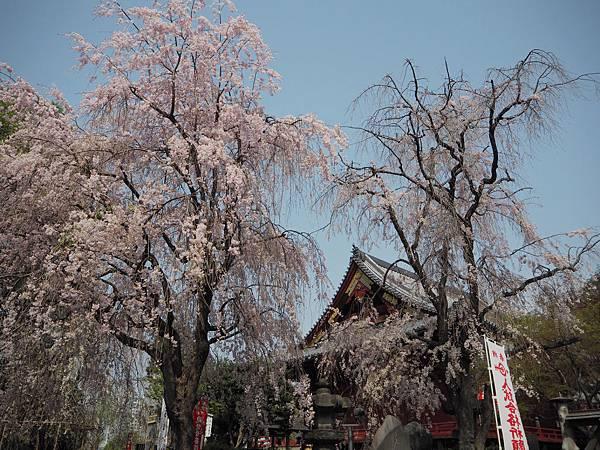 180403-1 上野恩賜公園 (5).JPG