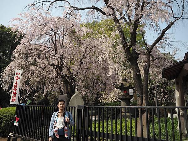 180403-1 上野恩賜公園 (7).JPG