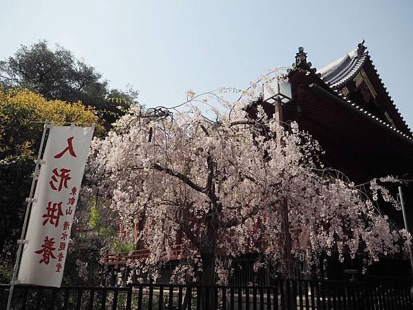 180403-1 上野恩賜公園 (8).JPG