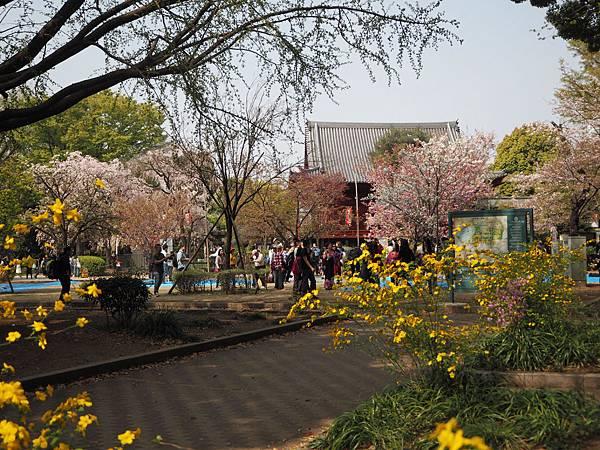 180403-1 上野恩賜公園 (10).JPG