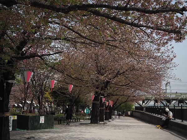 180403-2 淺草隅田公園 (10).JPG