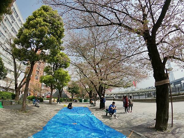 180403-2 淺草隅田公園 (11).JPG