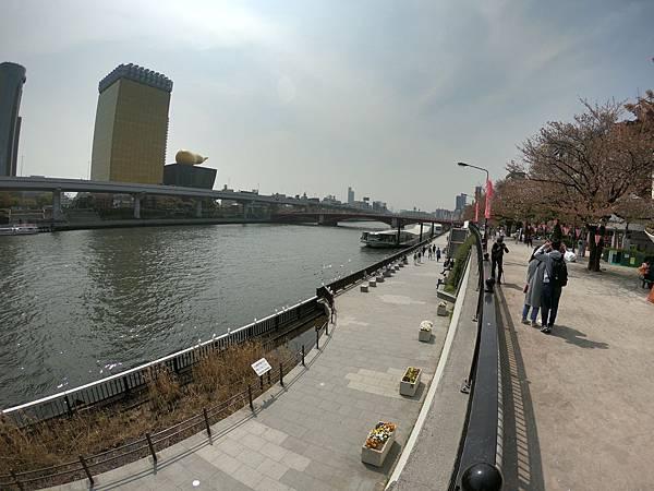 180403-2 淺草隅田公園 (12).JPG