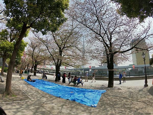180403-2 淺草隅田公園 (14).JPG