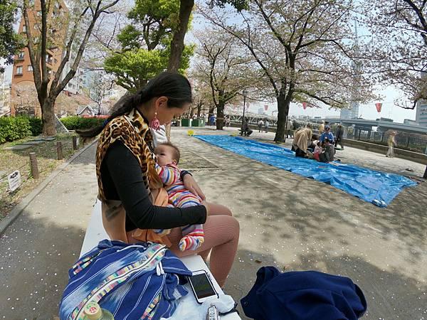 180403-2 淺草隅田公園 (16).JPG