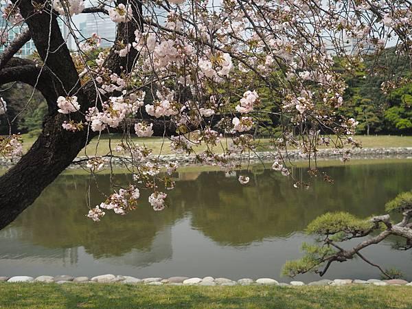 180403-4 濱離宮恩賜庭園 (7).JPG