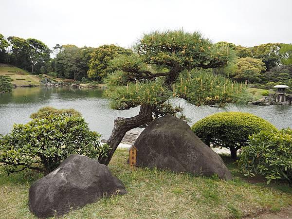 180405-4 清澄庭園 (4).JPG