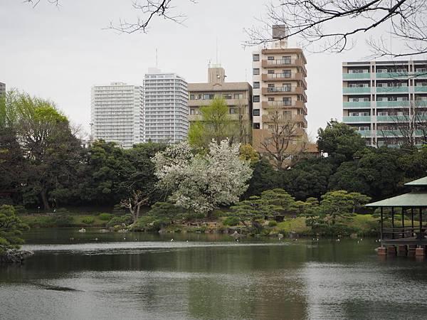 180405-4 清澄庭園 (27).JPG